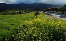 Portola Valley, CA
